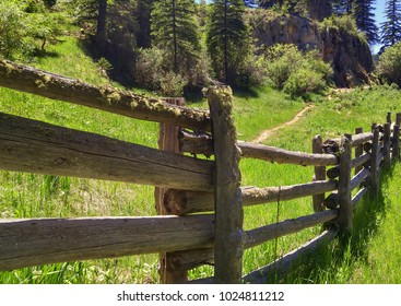 Moss Covered Fence