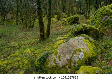 Moss covered forest floor in mountainous forest in northern Portugal
