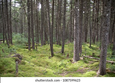 Moss covered forest floor in West Virginia