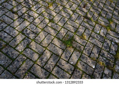Moss covered ground concrete pavement tiles grunge background