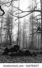 Moss covered logs in woodland on a misty morning