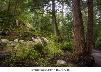 Moss covered rock sits below beautiful green old growth forest.