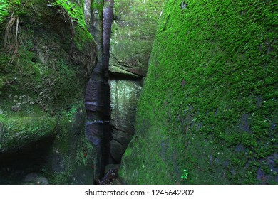 Moss covered rock wall in northern Alabama