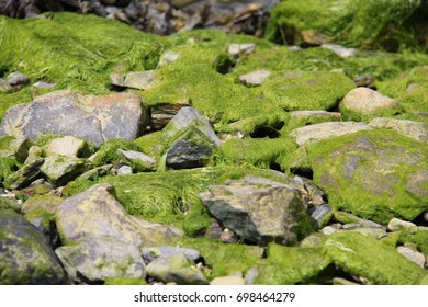 Moss covered rocks
