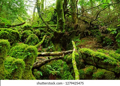 The moss covered rocks and fallen trees of Puzzlewood, an ancient woodland near Coleford in the Royal Forest of Dean, Gloucestershire, UK
