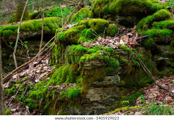 Moss covered rocks on the forest floor with dead leaves.