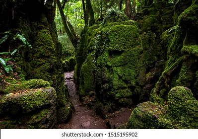 The moss covered rocks of Puzzlewood, an ancient woodland near Coleford in the Royal Forest of Dean, Gloucestershire, UK.