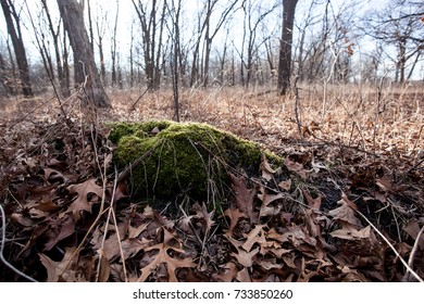 Moss covered section of ground in a natural forest