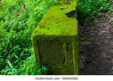 Moss covered stone in Wayanad, Kerala