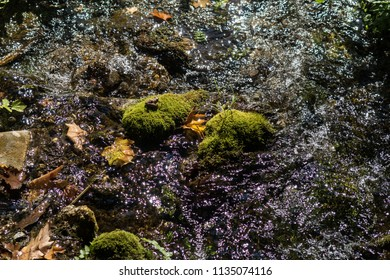 Moss covered stones in a creek