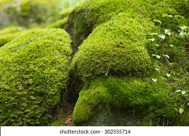 Moss covered stones in the forest.
