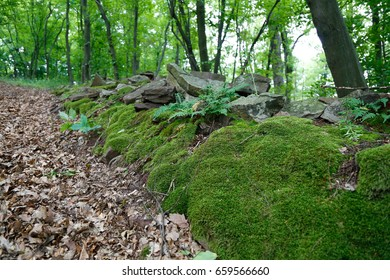 Moss covered stones in a mountain forest.