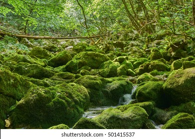 Moss covered stones on a small spring stream in Velebit mountain, Croatia