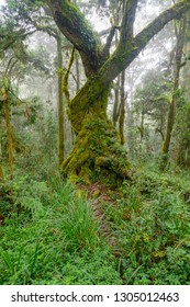 Moss covered tree in the rainforest