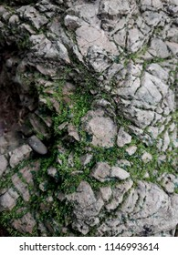 Moss in the crevice of the rock, Asian forest.