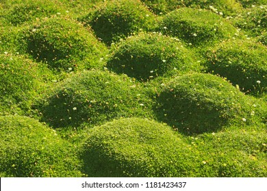 moss cushions in sunlight, natural green background