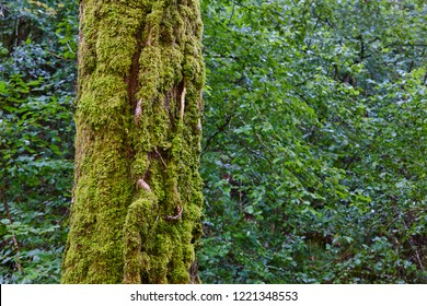 Moss detail on a tree trunk in a green forest