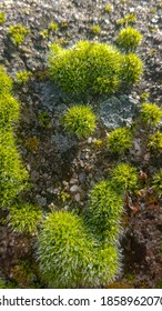 moss detail on wet rocks