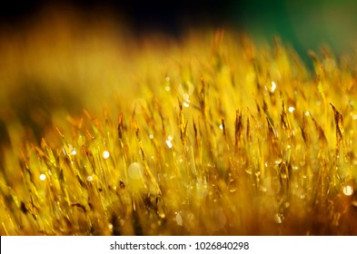 moss with dew