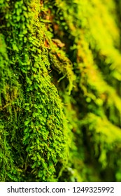moss in florest