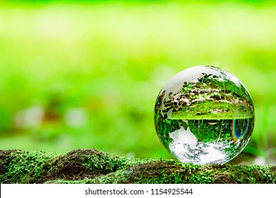 Moss and glass globe