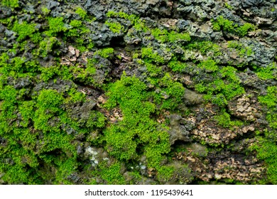 Moss grass on tree. green nature background