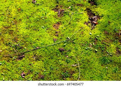 moss, green moss, nature, close up, abstract, wallpaper, background
