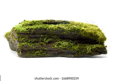 Moss green on rock white background.