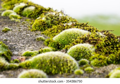 Moss growing on concrete