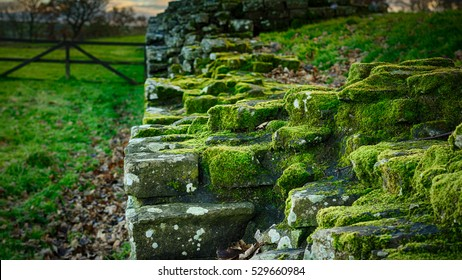 Moss growing on Hadrian's Wall in Cumbria