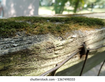 Moss Growing on an Old Wooden Fence