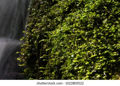 Moss growing on a rock next to a waterfall with a slow shutter speed