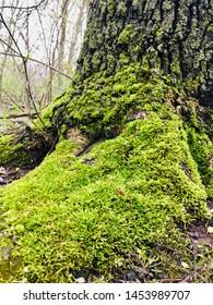Moss growing on a tree.