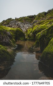 Moss grows on the rocks amongst the rock pools on a British beach
