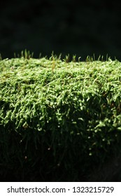 Moss grows on a tree's trunk and lit by the sun.