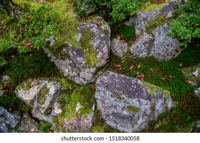 Moss growth on stone in the garden