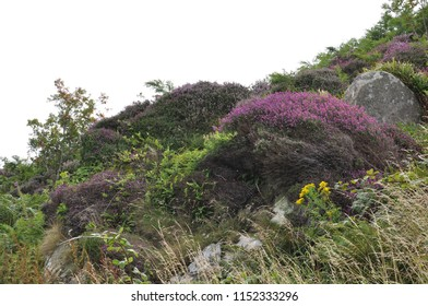 moss, heather, wild flora and fauna at Islay