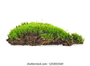 Moss isolated on a white background. Full depth of field.