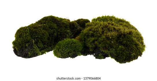 Moss isolated on white background.