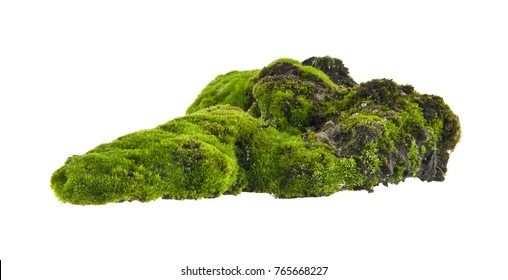 moss isolated on white background - Shutterstock ID 765668227