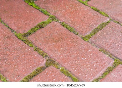 Moss in the joints as a nuisance for gardeners and homeowners
