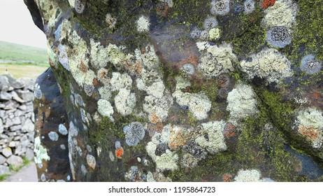 Moss and Lichen - Border Stone Scottish Border
