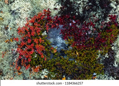 Moss, lichen and plants in different colors cover the ground. This image was taken in Rondane National Park in Norway.