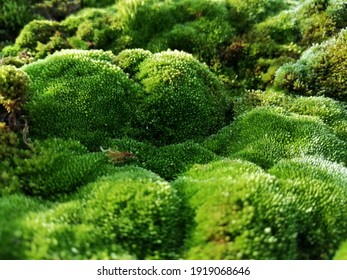 Moss looking like moss hills