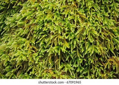 Moss Macro Extreme