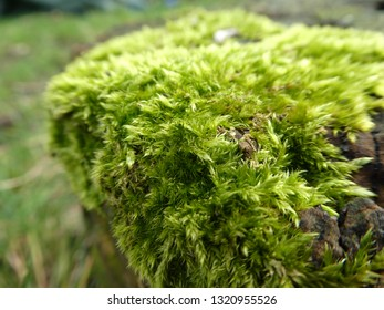 moss in my town