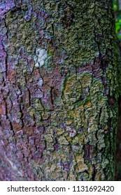 moss on bark tree