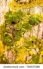 moss on the bark of a tree .