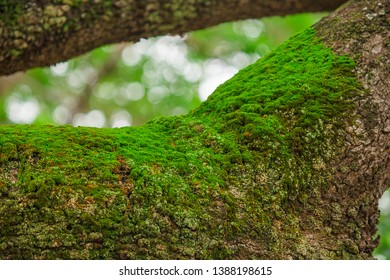 Moss on the bark of the tree in moist nature