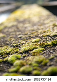 Moss on concrete wall, with shallow depth of field